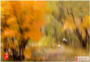 疯狂的秋色-写意花果山