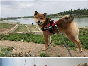 悬赏五千寻找爱犬![扩散]