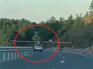 13岁小孩身体伸出车天窗外,不幸撞上限高栏……视频太揪心!