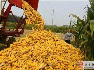专坑老农民,各种卖粮骗术频现农村!上当了一年就白干了!