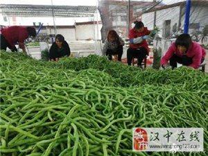 谢村镇回龙村架豆种植带动群众脱贫致富