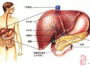 肝脏这4大症状需警惕,不要让无知害了你!