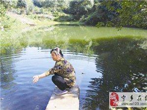 """池塘惊现""""水中大熊猫""""桃花水母"""