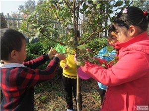 """开发区社区幼儿园开展""""爱绿护绿,从我做起""""社会实践活动"""