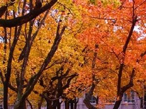 影像陕理工:五彩斑斓的秋