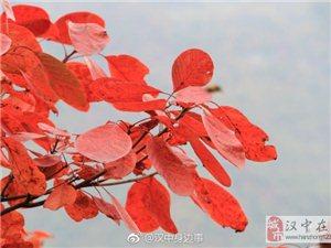 秋天到汉中略阳闪家坪去看秋叶
