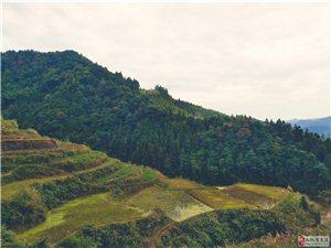 行走在松桃的大山上,遇上奇花异草,蓝天白云,实属难得!