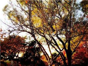 《秋色》(三首)