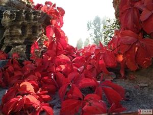 《红叶唤晨》