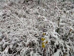 澳门美高梅国际娱乐场多地迎来了降雪天气