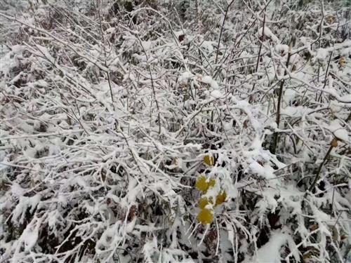 汉中多地迎来了降雪天气