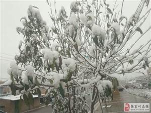 张家川的雪刷爆了朋友圈与快手