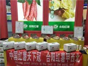 合阳红薯:誉满国际农交会