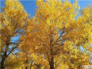 【绿野书院】北国之秋