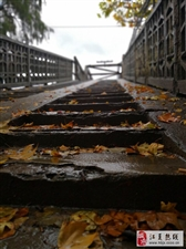 随笔    一座桥的故事