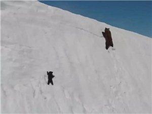 当你想放弃的时候,就看看这只小熊