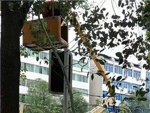温馨提示!盐亭县正在实施城市行道树修剪工作!