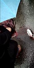 金城路一学校附近一学生被撞翻在雨中的路上,头部流血。