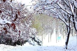 乖乖!漯河要下雪了......