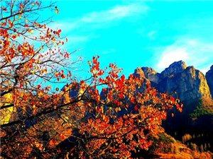 南太行――又一次深秋的邂逅