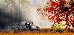 大悟歌曲《红叶颂》,大别山的红叶!