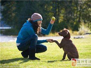 如何训练拉布拉多犬,训练的动作有哪些