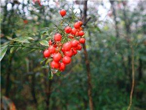 皇莆山的松原公园风景