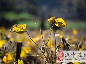 """惊艳!一入深秋,勉县这个小山村变成了""""童话世界""""!"""
