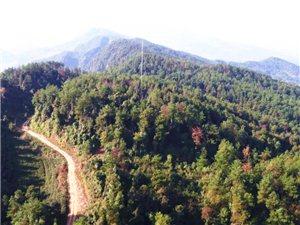 【旅游扶贫开发】丰都将把这个地方建设成现代化森林旅游景区