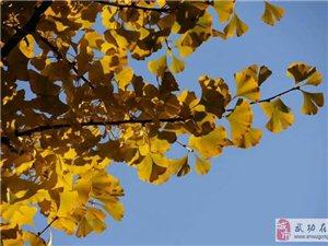 【绿野书院】秋日私语