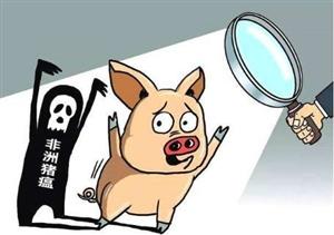 江西发现首例非洲猪瘟!会不会传染人?猪肉还能吃吗?官方回应