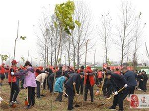 市委书记陈星带领市直机关干部职工到遂平和兴镇参加冬季义务植树