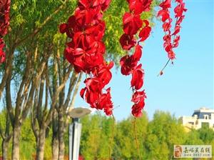 南市区的秋景美如画