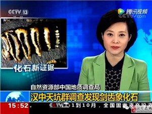 央视新闻报道!汉中天坑群内部发现10000年前剑齿象化石!