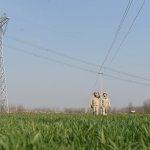 供电公司员工在10千伏方渡121线安装拉线警示管