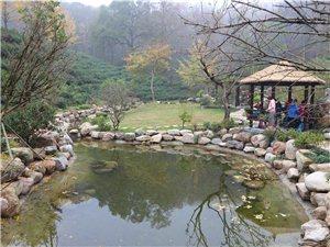 皇莆山的茶园风景