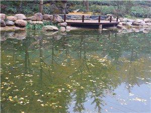 皇莆山的茶馆风景