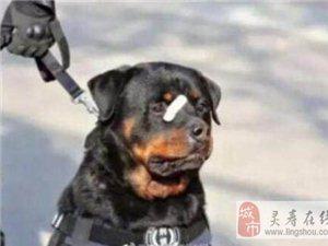 警犬�N��可�N走�t 硬照令�W友又笑又心疼