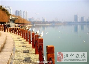 海鸥在威尼斯人网上娱乐平台天汉湿地公园翩翩飞