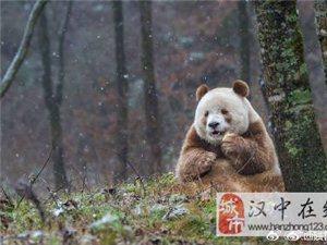 陕西省将用10年建成大熊猫国家公园陕西秦岭区