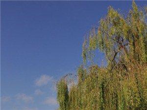 初冬的汉江天汉湿地公园