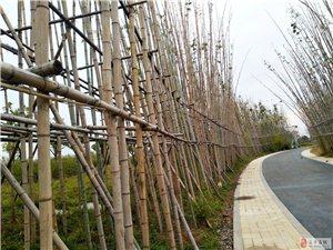 真美!遂平城南生态公园