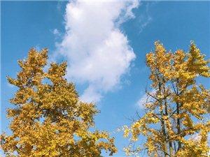 初冬的阳光很好,这里有最浓烈的色彩~四川广汉,三星堆博物馆