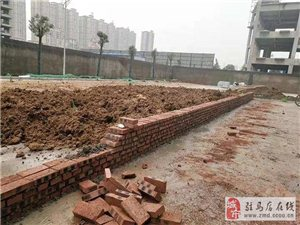 水泥地上搞绿化!为了应付验收?明珠港湾被市民投诉!