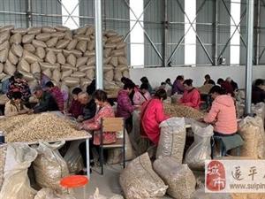 遂平县文城乡前湖村依托花生产业链助力脱贫新进程
