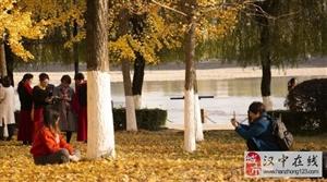 威尼斯人网上娱乐平台江边的黄叶!错过又要等一年!