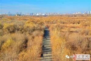 苏城巴彦摄影之松花江江畔湿地晚秋-丁良