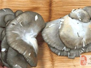 炸蘑菇好吃的小�[�T
