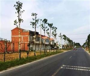 临泉这项大工程,涉及每个乡镇!!