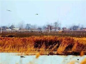 """在�S河、洛河、渭河交界�,有一��小城堪�Q�西的""""塞上江南""""!"""